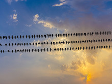 Many Pigeons On An Electric Wiress