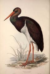 Fototapeta Ptaki Illustration of a bird