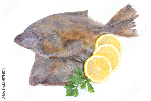 Slika na platnu Fish halibut on white background