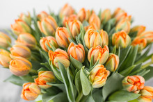 Tulips Of Orange Color. Big Buds Of Multicoloured Tulips. Floral Natural Backdrop. Bicolour Tulips Filled Picture. Unusual Flowers, Unlike The Others. Shallow Focus.
