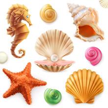 Shell, Snail, Mollusk, Starfis...