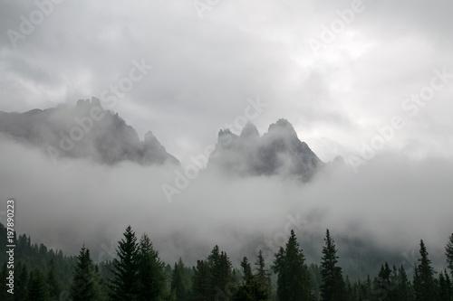 pinnacles-w-mgle-z-drzewami-wiosluja-w-przedpolu