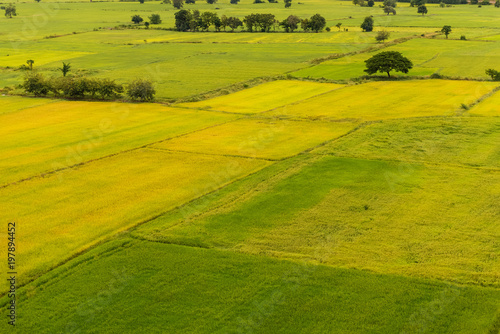 Green terrace rice field