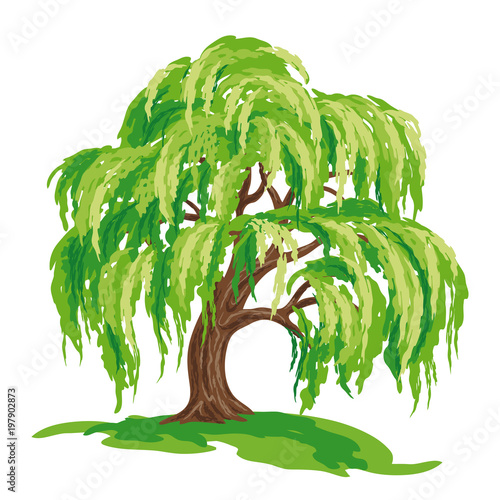 Vector drawing of willow tree Fototapet