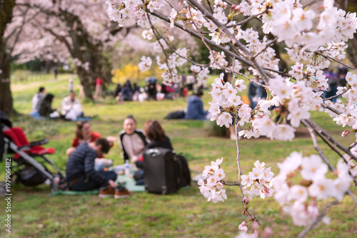 People having picnic under cherry trees in Tokyo, Japan 東京の公園で花見をする人々
