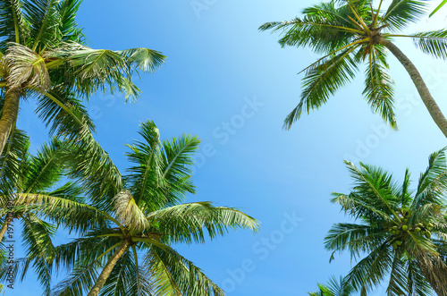 Spoed Foto op Canvas Natuur Summer clear blue sky with tropical coconut palm trees. Bottom view. Vacation, relax, holidays background.