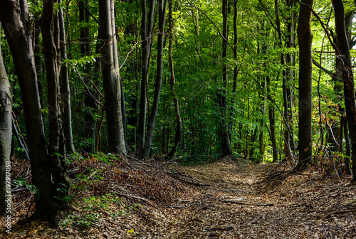 Poster Forets road through forest covered with weathered foliage. beautiful nature scenery, lovely place for a walk or trail running