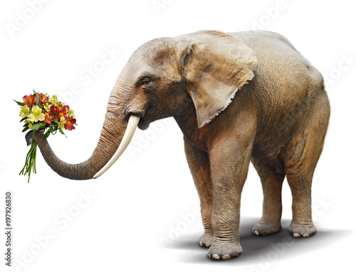 Elephant handing a bouquet of blooming flowers. Concept for greeting card, poster, cover, and more.