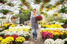 Joyful Hardworking Middle Age Florist Woman Holding A Big Pot Of Red Flowers While Walking Down The Large Greenhouse.
