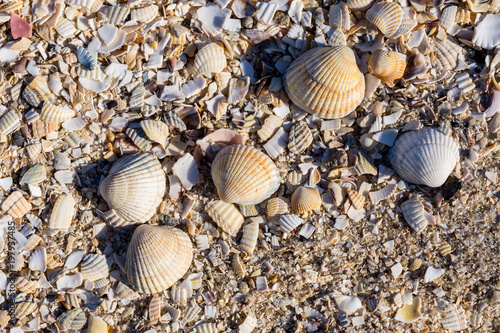 Muscheln und Schnecken an der Nordsee