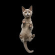 canvas print picture - Bottom view of Burmese Kitten Standing with Cute paw pads and Curious Face Gazing on isolated black background