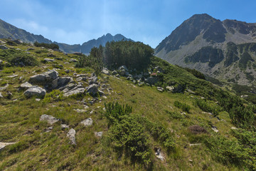 Fototapeta na wymiar Landscape of Begovitsa River Valley and Yalovarnika peak, Pirin Mountain, Bulgaria