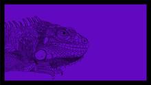 Iguana Drawn Vector Line Monochrome On Purple