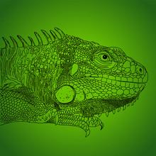 Iguana Drawn Vector Line Monochrome On Green
