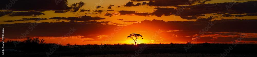 Fototapeta savannah sunset behind tree orange sky