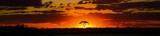 Fototapeta Sawanna - savannah sunset behind tree orange sky