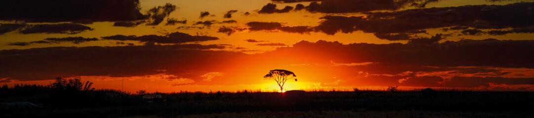 savannah sunset behind tree orange sky