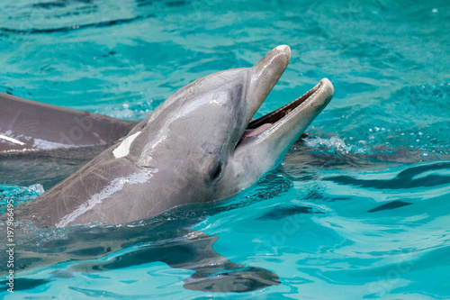 In de dag Dolfijn a dolphin swims in a large pool
