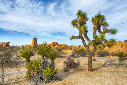 Poster de jardin Parc Naturel Joshua Tree National Park