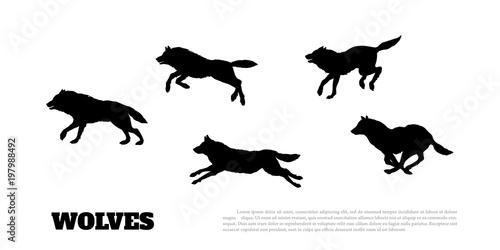 Fototapeta premium Czarne sylwetki stada wilków na białym tle. .Bieganie drapieżników. Zwierzęta leśne