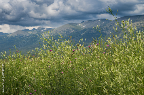 Tall grass yellow and purple flowers with blurred mountain peaks tall grass yellow and purple flowers with blurred mountain peaks and cloudy sky in the mightylinksfo
