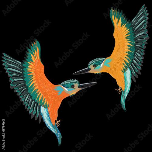 Kingfishers flying Canvas Print