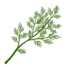Fresh Dill. Green Vegetables. Cartoon Green Dill Close-up. Vector Illustration.