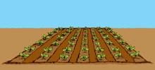 Garden Beds. Vector Drawing