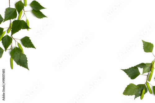 Fotografie, Obraz  Twigs birch with green leaves and catkins on a white background with space for text