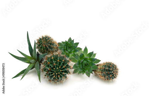 Stickers pour porte Cactus Succulents and cactuses on a white background with space for text