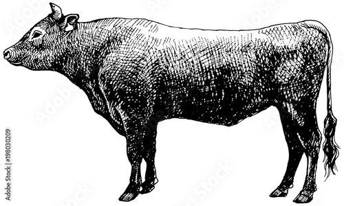 黒毛和牛 ペン画 Billede på lærred