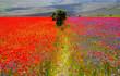 canvas print picture - Castelluccio di Norcia Italy