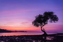 Landscape With A Lonely Tree O...