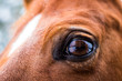 canvas print picture - Horse's eye