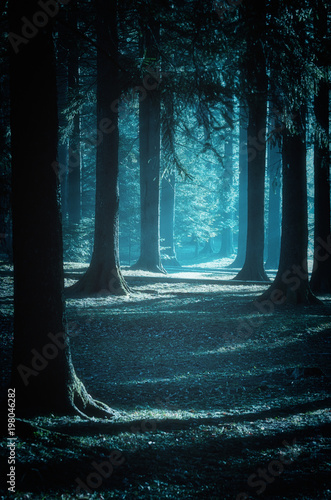 Wall Murals Forest Mystical path through the woods at moonlight