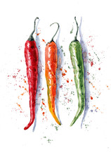 Watercolor Hand-drawn Illustration Of Chili Pepper On The White Background