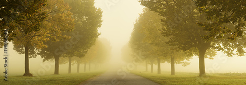 Photo Stands Narrow alley Avenue of Linden Trees in Dense Autumn Fog