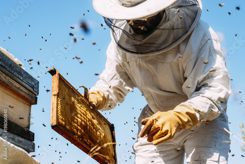 Photo Stands Bee Beekeeper working collect honey.