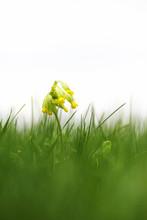 Beautiful Early Fresh Yellow F...