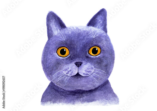 Portrait of a British blue cat. Watercolor illustration.