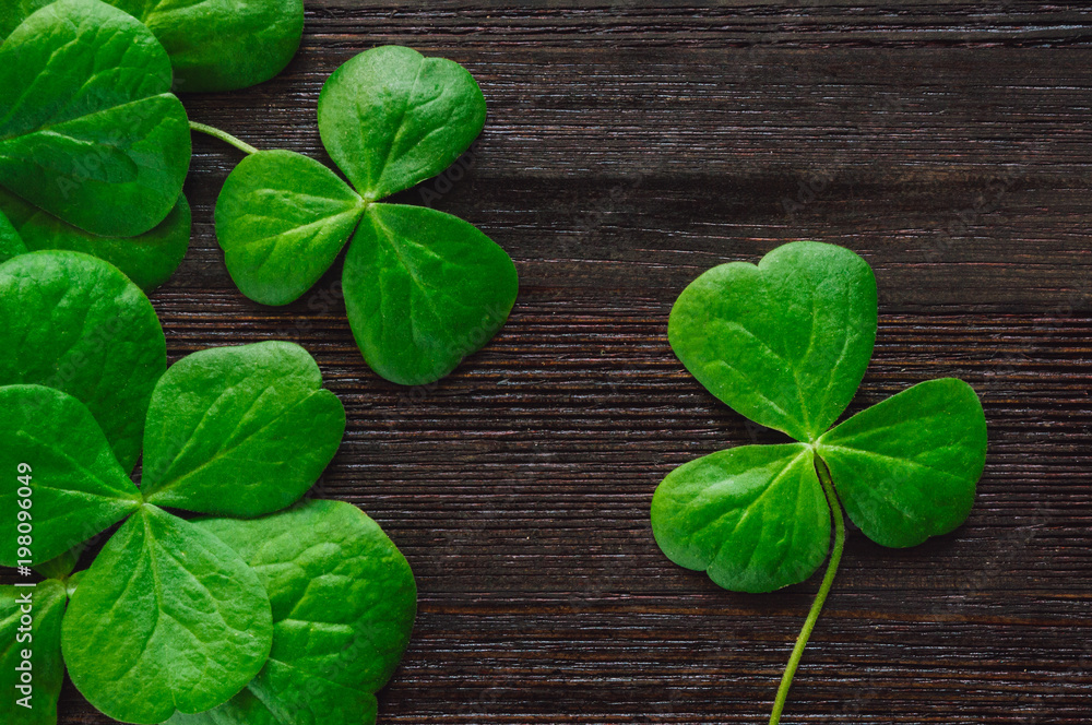 Fotografia, Obraz  Shamrocks on Dark Table