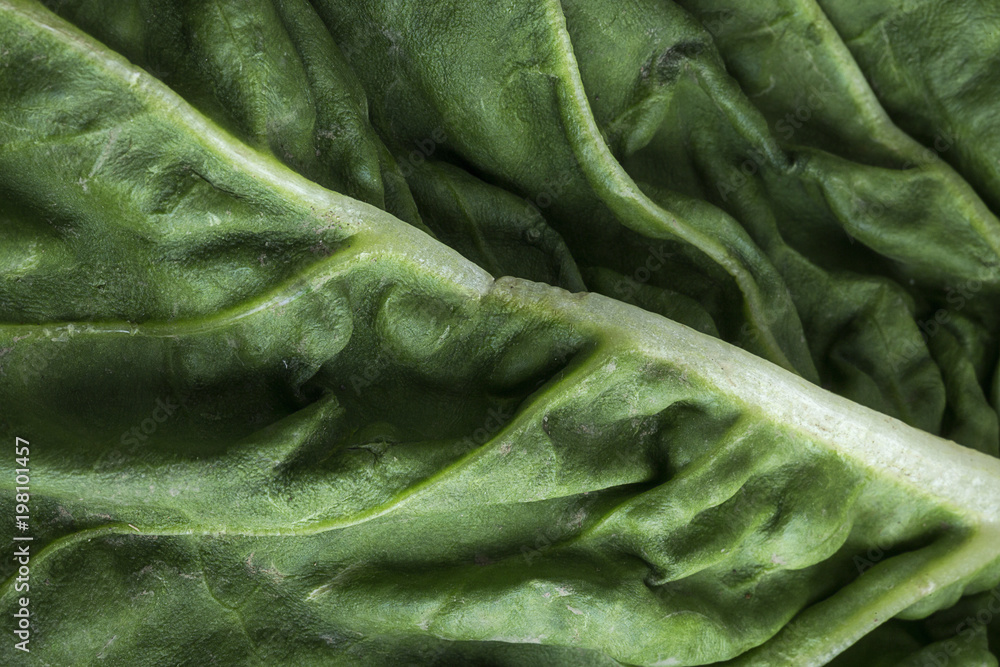 Fototapety, obrazy:  Close up chard on colorful table
