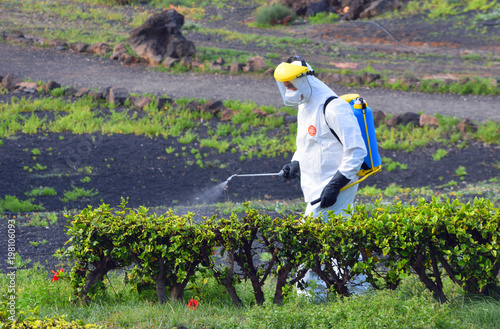 Fotomural Insecticide Spraying of garden man wearing protective suit.
