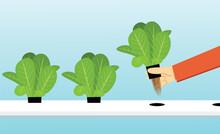 Farmer Harvest Hydroponics Plants In Vector Design