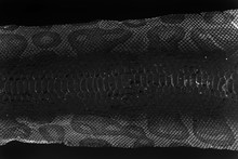 Jacket Cast-off Skin Of Snake Royal Python On A White Background. Computer Processing, Inversion