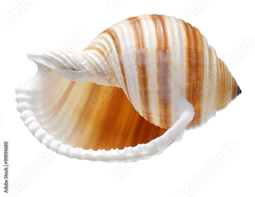 Seashell isolated on white background