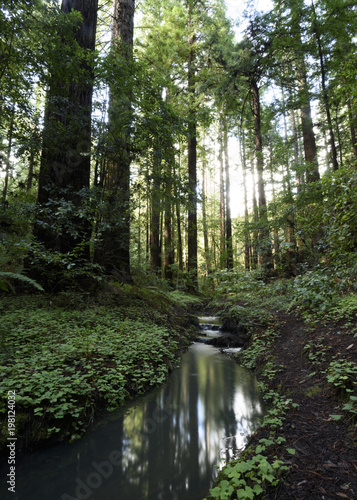 Serene creek view among the redwoods and moss covered forest Wall mural