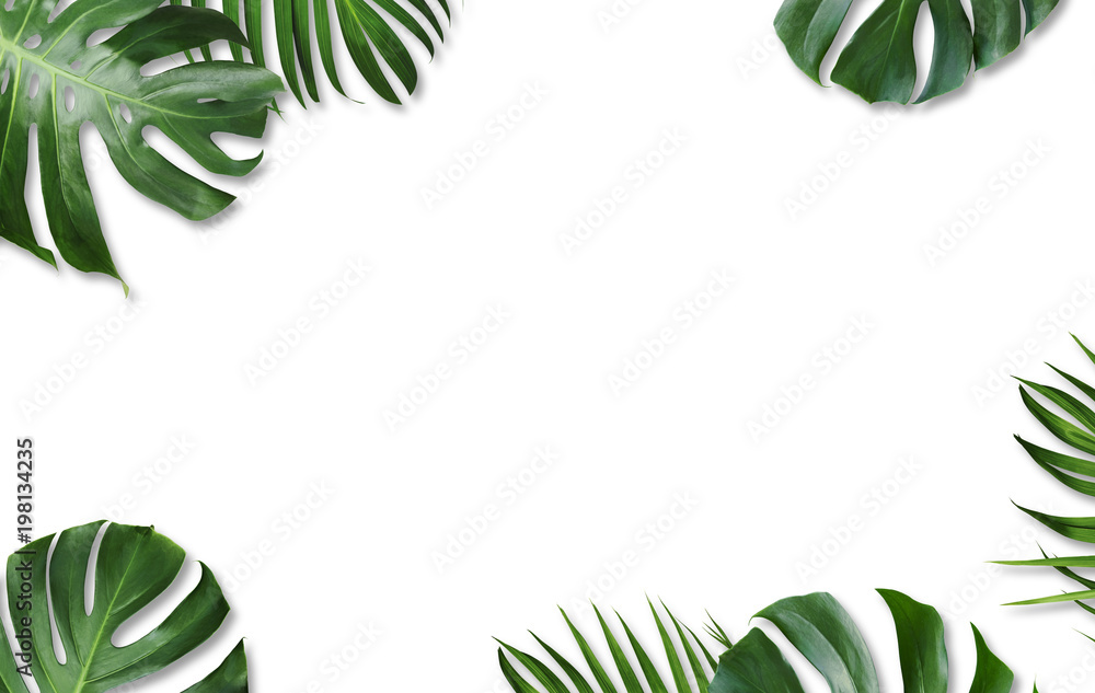 Fototapety, obrazy: Monstera deliciosa and yellow palm tropical leaves isolated on white background