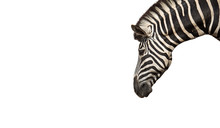 Head Of Zebra Isolated On White Background, Clipping Path