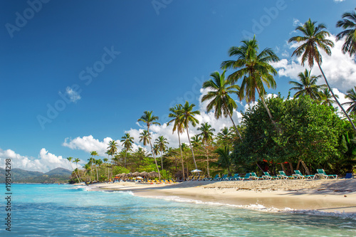 Photo Stands Turquoise perfect empty Caribbean sandy beach with clear water and green palm trees